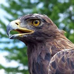 Delaware Valley Raptor Center